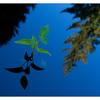 Milner Gardens 2019 4 - Nature Images
