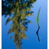 Milner Gardens 2019 3 (1) - Nature Images