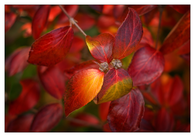 Backyard Fall 2019 3 Close-Up Photography
