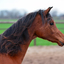 paard6 - balingehofforum