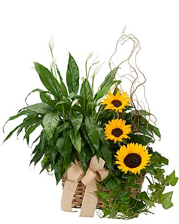 Flower Shop Brentwood TN Flower Delivery in Brentwood