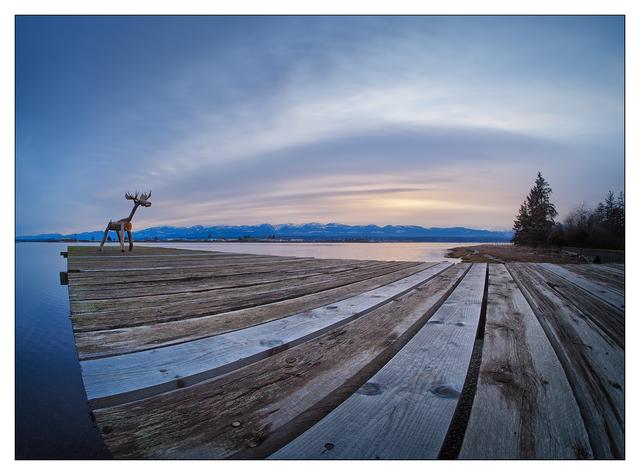 Comox Moose 2020 2 Comox Valley