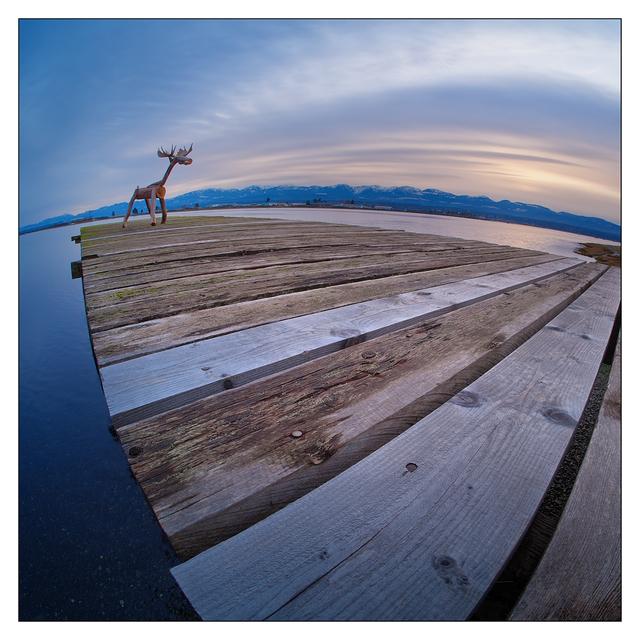 Comox Moose 2020 3 Comox Valley