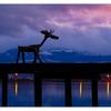Comox Moose 2020 b - Comox Valley