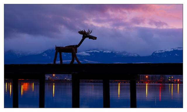 Comox Moose 2020 b Comox Valley