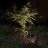 Landscape lighting designer - PHOTOS