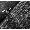 Filberg 2020 8 - Black & White and Sepia