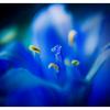 Kinda Blue 2020 2 - Close-Up Photography