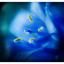Kinda Blue 2020 1 - Close-Up Photography
