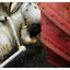 Country Market Tractor 12 - Comox Valley
