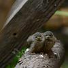 birdies1 - balingehofforum