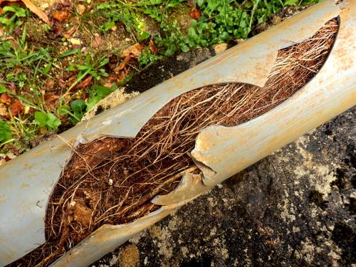 Plumber American Roto Drains & Plumbing