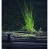 Coal Hills 2020 4 - Nature Images
