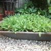 Kruiwagenbak 12-08-20 - In de tuin 2020