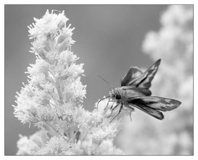 Lerwick Park 2020 5 Black & White and Sepia