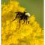 Lerwick Park 2020 2 - Close-Up Photography