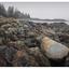 Neck Point 2020 5 - Landscapes