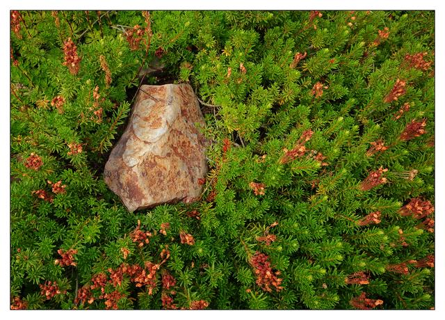 Mt Washington 2020 5 Nature Images