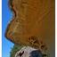 Biggs Park 2020 3 - Nature Images