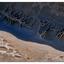 Biggs Park 2020 4 - Nature Images