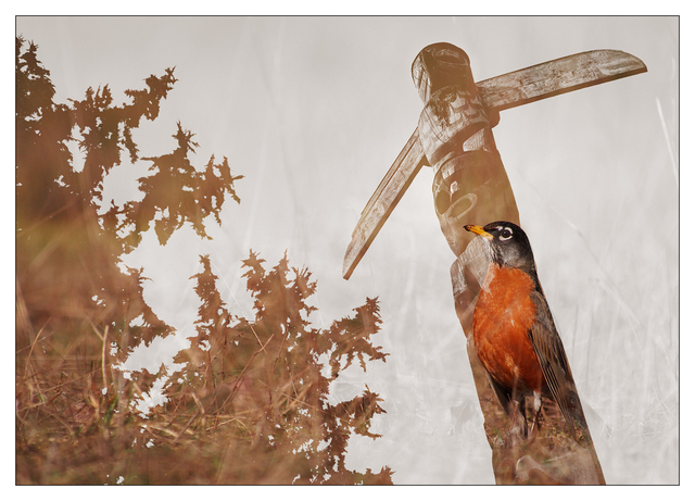 Totem Bird 2020 Multiple Exposure