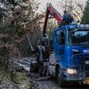 www.bsd-wald.de, www.lkw-fa... - BSD - Wald & Holz #truckpic...