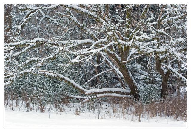 Hawk Glen Winter 2021 3 Nature Images