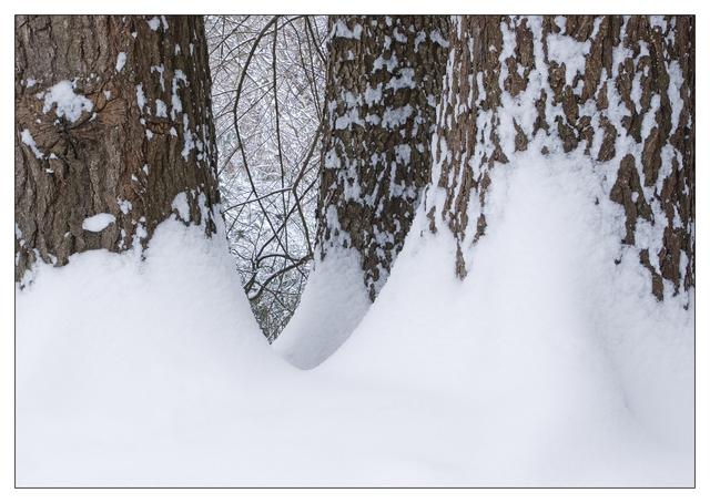 Hawk Glen Winter 2021 4 Nature Images