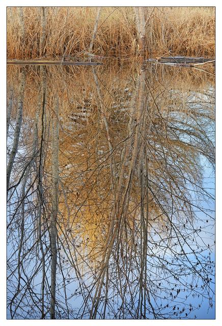 Lazo Park Pond 2 2021 Nature Images