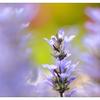Backyard 2021 4 - Close-Up Photography