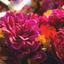 Flower delivery near me - Florist in Abington, MA