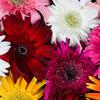 Next Day Delivery Flowers W... - Florist in Wapakoneta, OH