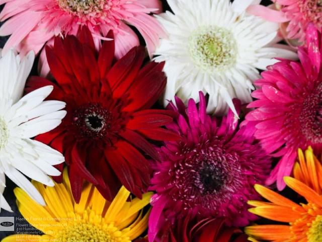 Next Day Delivery Flowers Wapakoneta OH Florist in Wapakoneta, OH
