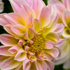 Fort Lauderdale FL Same Day... - Florist in Fort Lauderdale, FL