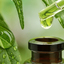 Health Benefits of Green Lo... - Picture Box