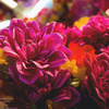 Flower delivery near me - Florist in Aberdeen, SD