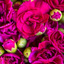 Flower Delivery in Fort Mil... - Florist in Fort Mill, SC