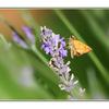 feeding moth  - Close-Up Photography