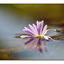 Floating Flower - Close-Up Photography