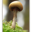 Mushroom At Lerwick - Close-Up Photography