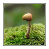 Little Mushroom - Close-Up Photography