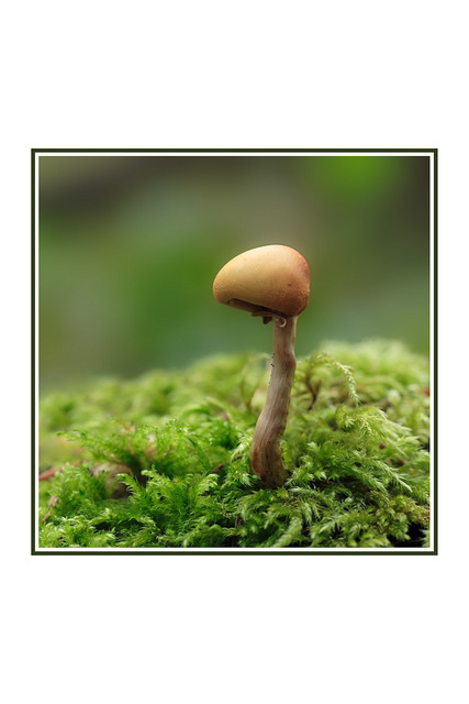 Little Mushroom Close-Up Photography