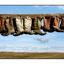 --Sask Boots - Saskatchewan