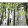 lerwick park mist - Nature Images
