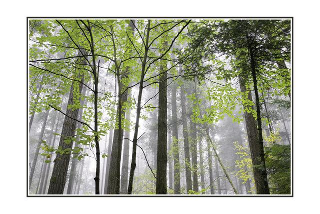 lerwick park mist Nature Images
