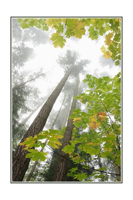 lerwick park fog Nature Images