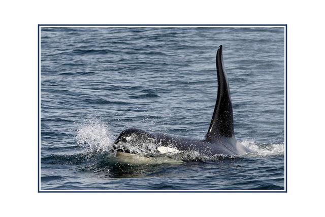 whale02 Wildlife