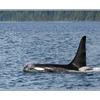 whale07 - Wildlife