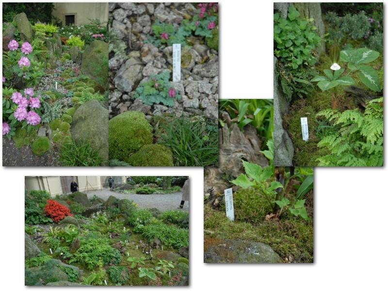 Rock' Gardener Club Prague 1711869