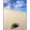 -Desert in Sask - Saskatchewan